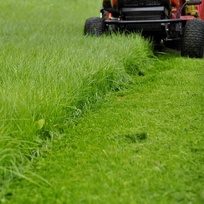 Tonte de pelouse à Montbéliard