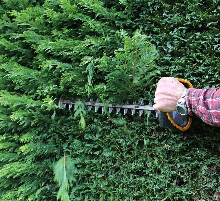 Taille de haie & taille d'arbuste à Montbéliard